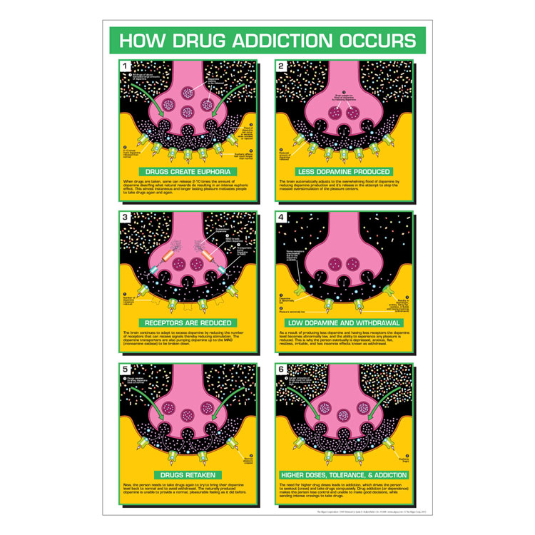 Drug Education Posters How Drug Addiction Occurs