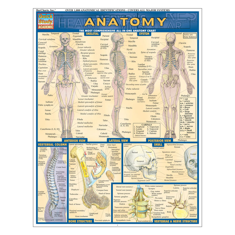 QuickStudy Laminated Reference Guides - Anatomy