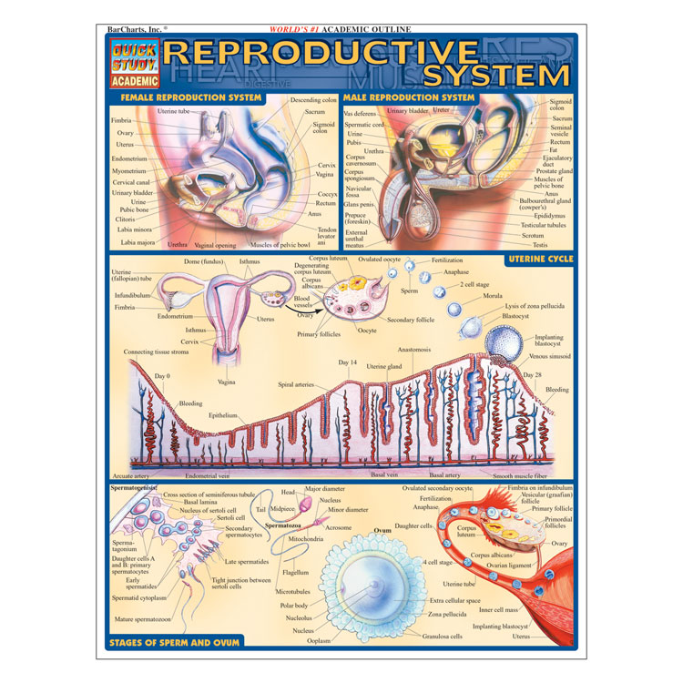 QuickStudy Laminated Reference Guides - Reproductive System