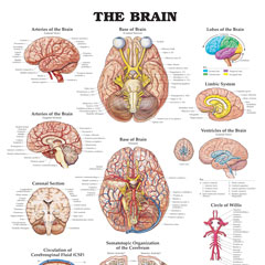 Parts of the Human Body