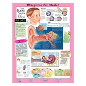 Kate Sweeney Elementary Health Charts:  Your Ears