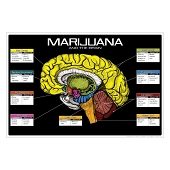 Drug Education Posters - Marijuana and the Brain