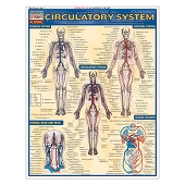 QuickStudy Laminated Reference Guides - Circulatory System