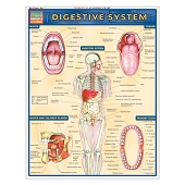 QuickStudy Laminated Reference Guides - Digestive System