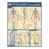 QuickStudy Laminated Reference Guides - Skeletal System