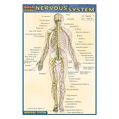 QuickStudy Pocket Guides - Nervous System