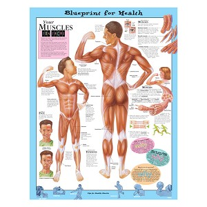 Kate Sweeney Elementary Health Charts:  Your Muscles