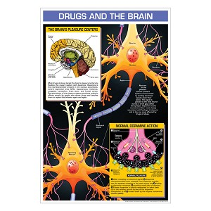 Drug Education Posters - Drugs and the Brain