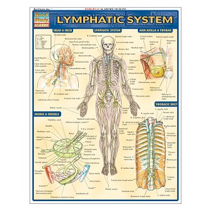 QuickStudy Laminated Reference Guides - Lymphatic System